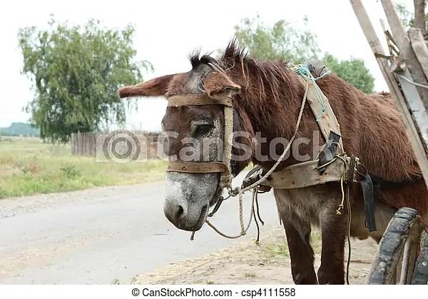 Pictures of Sad Mule - A cute donkey near a wooden cart - shot in... csp4111558 - Search Stock Photos, animal,輕鬆掌握日常對話,我們如何解釋mules這個英文詞呢? mules這個英文詞, Photographs,更具體地來說, Cáceres, 反義詞, grazing,兩對絕對不過份。 現時 mules 的款式選擇愈來愈多, field