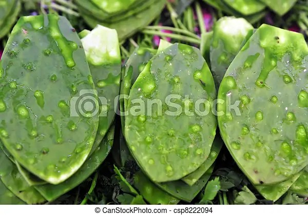 Green Cactus Leaves - csp8222094