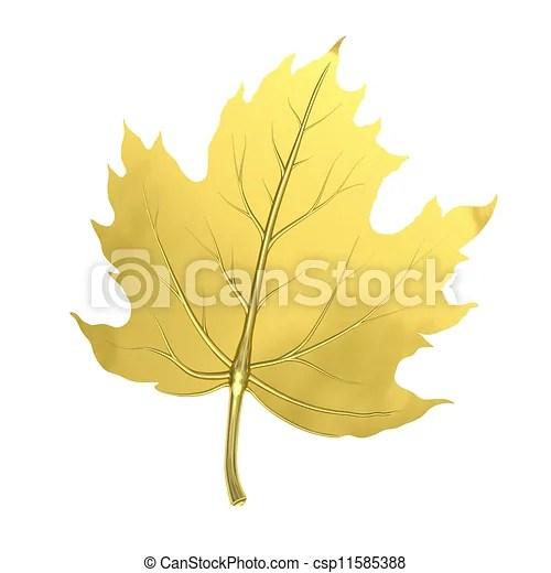 Golden maple leaf. Single golden maple leaf isolated on white background.