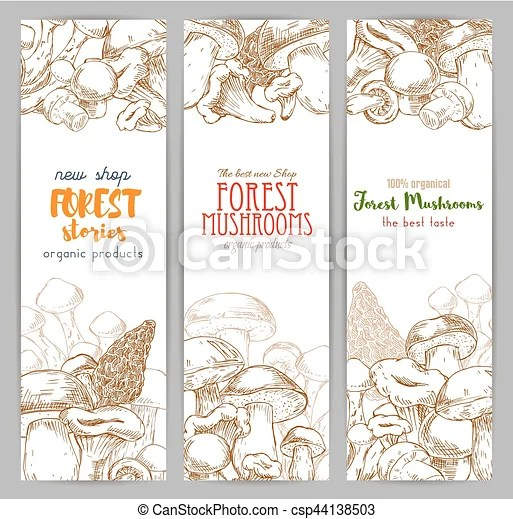 The information in this chapter represents primarily forest products laboratory research results. Mushroom Sketch For Autumn Forest Banner Autumn Forest Banner With Mushroom Sketch Drawing Of Wood Nature Like Russule And Canstock