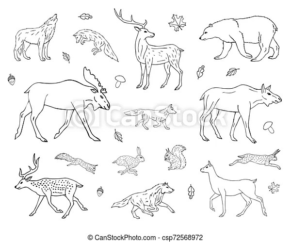 The editors of publications international, ltd. Vector Hand Drawn Sketch Set Of Forest Animals Vector Hand Drawn Sketch Set Collection Of Forest Animals Isolated On White Canstock