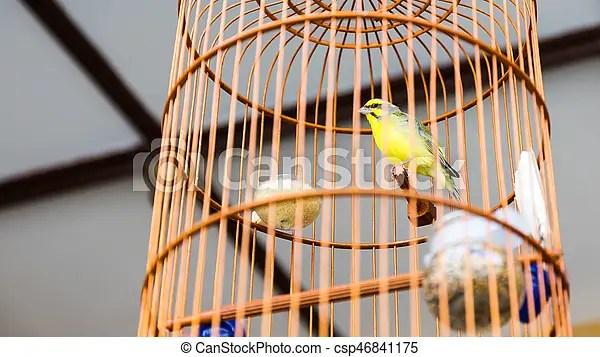 https www canstockphoto fr bois mettez cage oiseau jaune 46841175 html