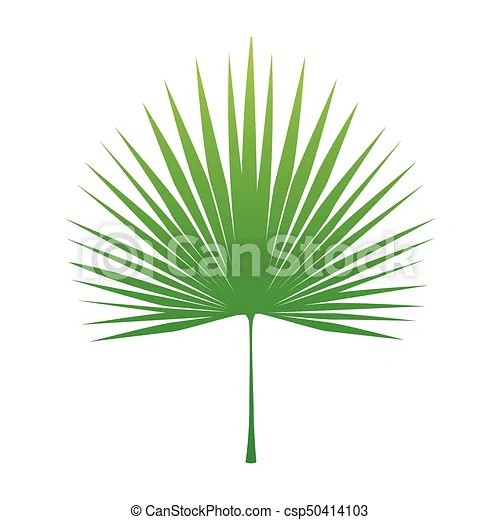 https www canstockphoto fr feuille tropicale palmier 50414103 html