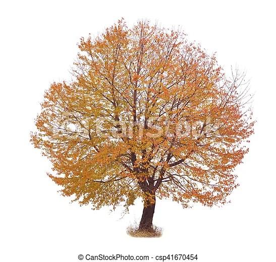 pre arbre automne fond blanc rouge