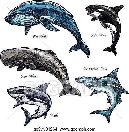 Vector Art Giant Sea Animals Whale And Shark Vector Icons Set Clipart Drawing Gg97531264 Gograph