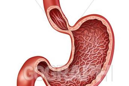 Interior Anatomy Of Stomach 4k Pictures 4k Pictures Full Hq