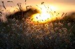 warm-grass