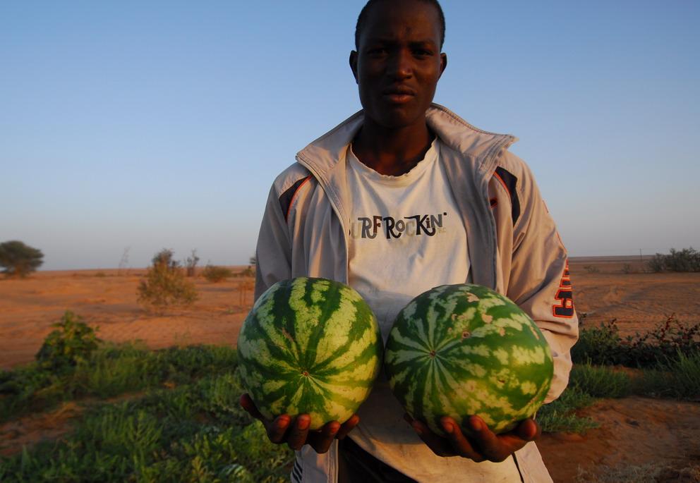 121 Sud della Libia. Waw Kabir. Orti del deserto