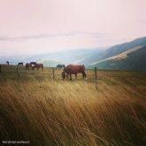cavalli a monte petrano/1