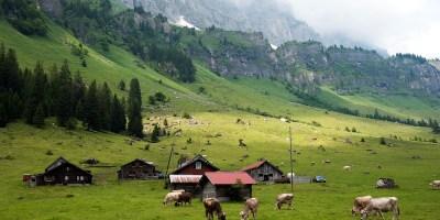 Svizzera Agroscope Gabriela Brandle