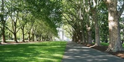Mite_riforestazione_urbana