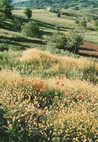 paesaggio altirpino _a.verderosa 2006