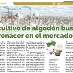 El cultivo del algodón busca renacer en el mercado