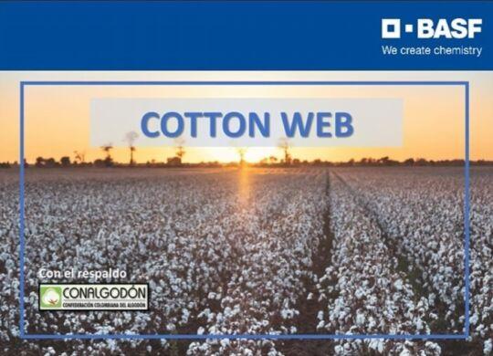 basf cotton web 23 nov-1