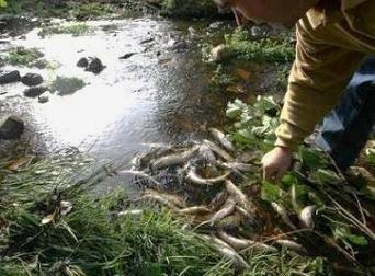 La falta de sensibilidad medio ambiental del Ayuntamiento de Bembibre provoca una catástrofe ecológica en el arroyo del Rial (2/3)