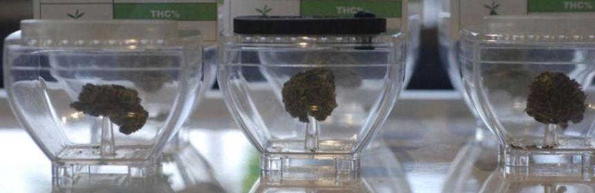 marihuana crop1581658885869.jpeg 673822677 - Oferta de Nuevo México para la marihuana recreativa está casi condenada - #Noticias