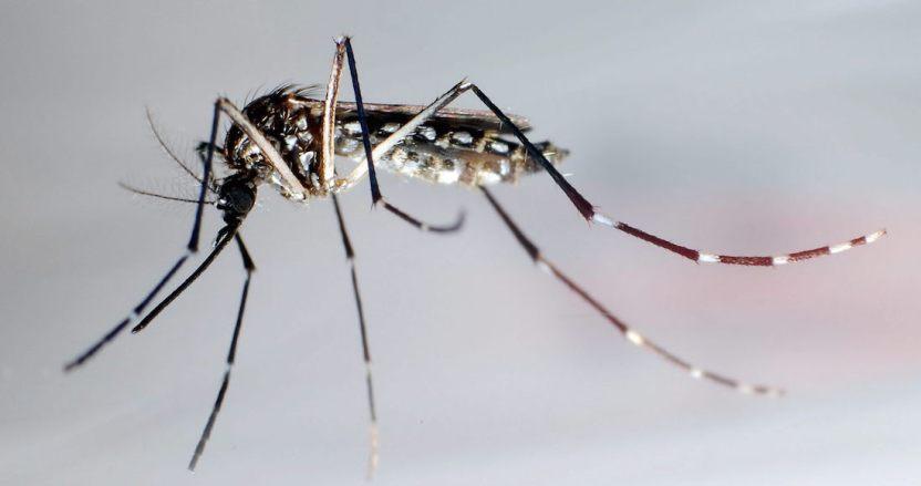 12314628 - Los mosquitos, ¿transmiten el COVID-19? Aquí cuatro razones por las que la respuesta es NO