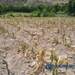 CAMPO - Conagua reporta que 400 municipios del país sufren sequía