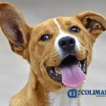 dia del perro - En China, ahora los perros serán considerados 'animales especiales de compañía' y ya no para su consumo