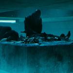 el hoyo - ¿Cuál iba a ser el final original de El hoyo? Galder Gaztelu-Urrutia habla sobre el guión original