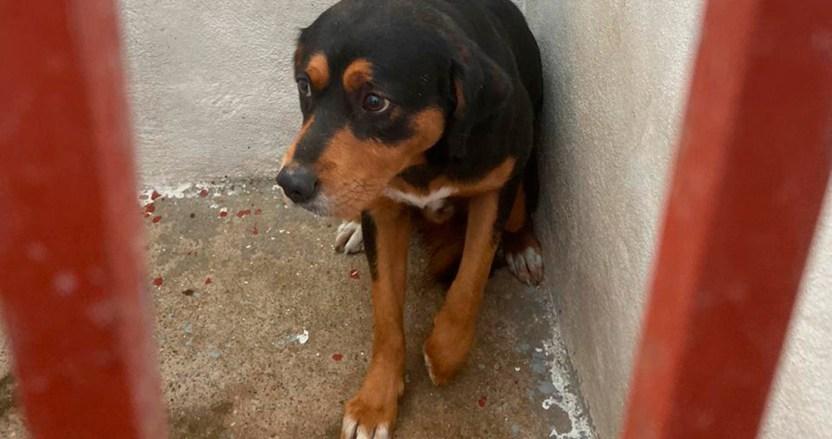 perritosabandonados covid19 especial01 - Perros callejeros son olvidados por COVID-19; un centro de CdMx promueve adopciones a distancia