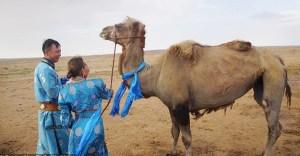 camello escapa y vuelve con amos - Sediento de amor: Camello vendido escapó y vagó 7 días por el desierto para volver con su familia