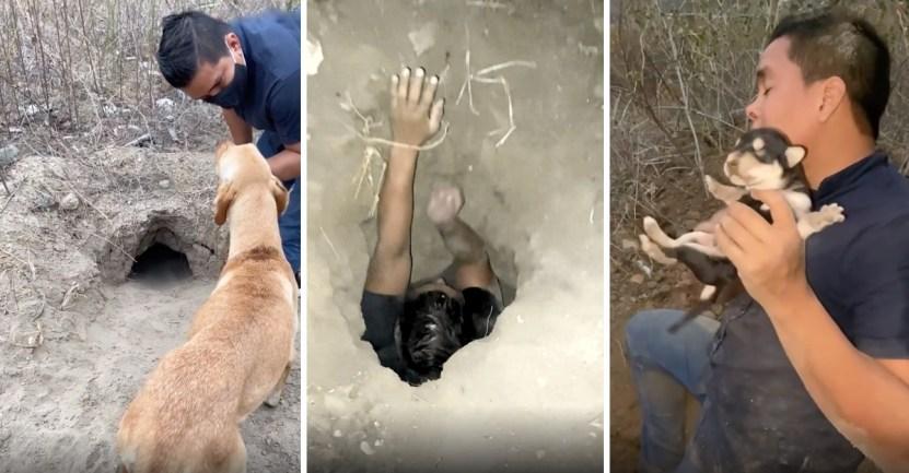 portada rescata 8 cachorritos enterrados profundo agujero usando pies - Usando sus pies, rescató a 8 cachorritos enterrados en un profundo agujero. Casi se quedan sin aire