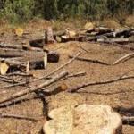 Deforestación - Falta una política de Estado transversal en materia ambiental