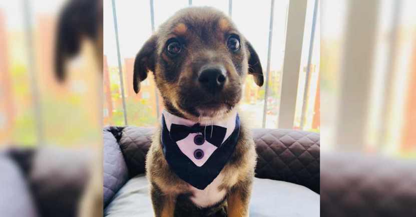 familia deja plantado a perrito en mexico - Familia dejó plantado a un perrito tras prometer ir a adoptarlo. Quedó vestido, bañado y confundido