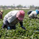 oxnard - $1,500 dólares de ayuda económica para los trabajadores agrícolas de Ventura