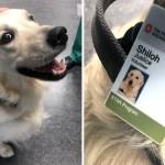 perro voluntario hospital ohio - Hospital contrata a encantador perrito como voluntario para desestresar colegas. Podrán acariciarlo