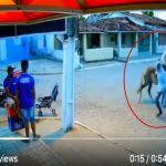 VIDEO  Sujetos armados usan caballo para robar les dicen los jinetes del Apocalipsis - VIDEO: Sujetos armados usan caballo para robar; les dicen los jinetes del Apocalipsis