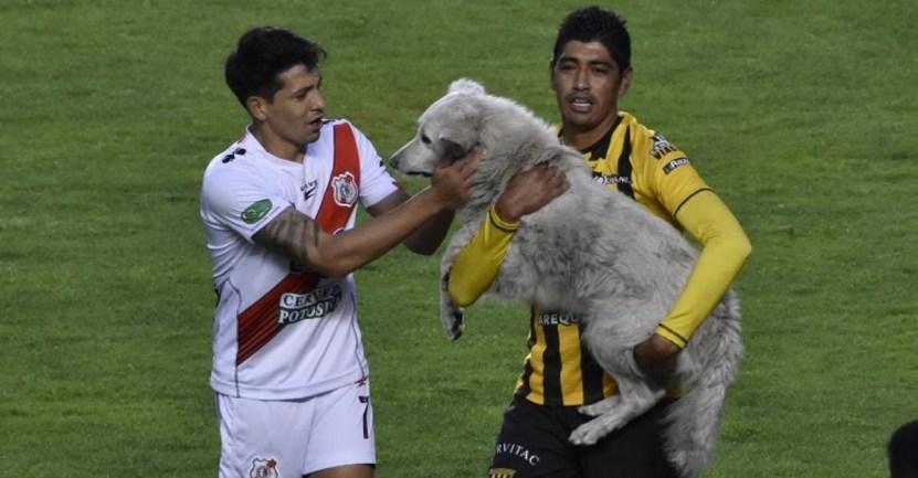 perro partido futbol bolivia - Perro que invadió una cancha fue adoptado por un futbolista en Bolivia. Le hizo un gol a su corazón