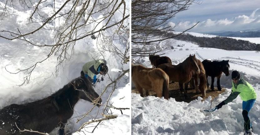 44 caballos espana nieve tormenta hielo frio yeguas - Rescatan a yeguas tras quedar enterradas en la nieve de España. Podrían haber sufrido de hipotermia
