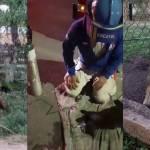 Con rescate animal inician el ano autoridades de seguridad de Mexico - Con rescate animal inician el año autoridades de seguridad de México