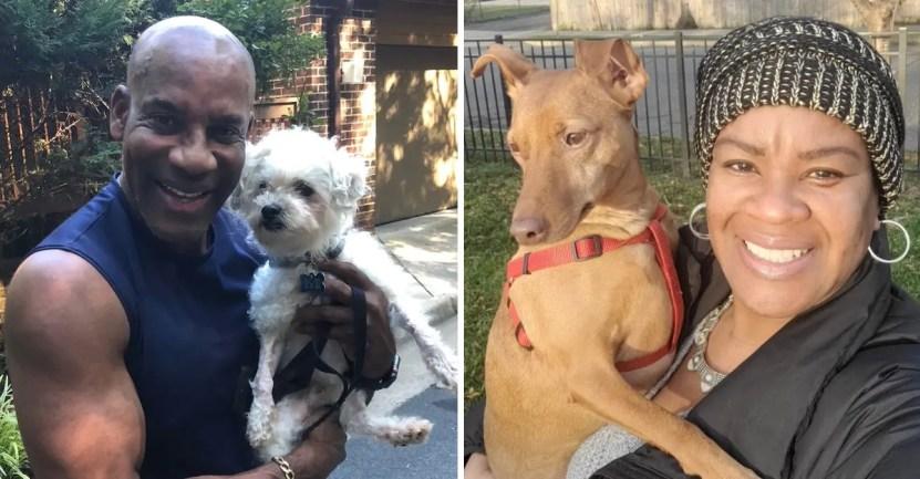 adopcion perros portada - En Estados Unidos aumentó la adopción de perros gracias a la pandemia. Los refugios están vaciándose