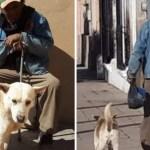 anciano perro - Fiel perro espera a su dueño fallecido en la puerta de su casa. No quiere moverse hasta poder verlo