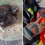 gato cabeza contenedor bomberos - Bomberos en Málaga rescataron a gatito con cabeza atorada en un contenedor. Estaba muy enojado