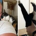 gato estirando recoger tomara brazos - Esta gatita espera a su papá humano todos los días para que la ayude a estirarse. Son tal para cual