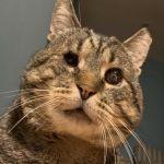 gato fliyd meyweather - Él es Floyd Mayweather: Un afable gato ciego que fue adoptado tras vivir 10 años en la calle