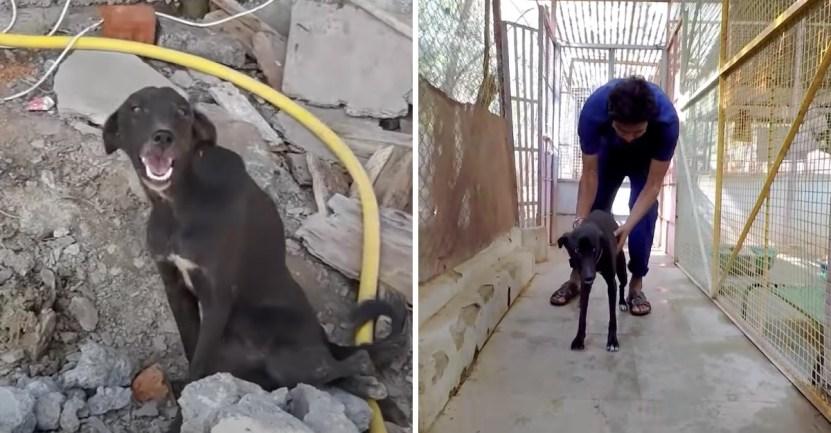 perrita paralizada rescate - Perrita callejera quedó paralizada y solo sonreía sin poder pedir ayuda. Volvió a correr libremente