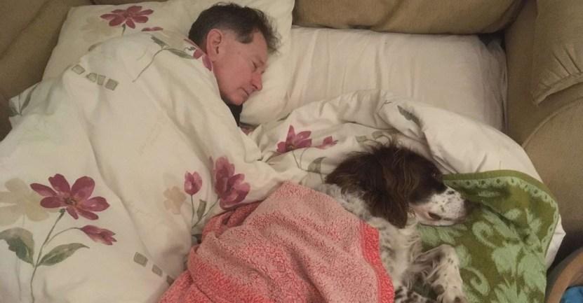 perro mayor anciano padre sofa living  - Amo duerme en el sofá para acompañar a su perro anciano. Es tan viejito que ya no sube las escaleras