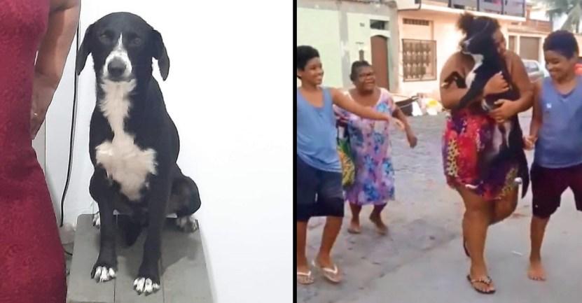 portada encontro perrito perdido gracias poder redes sociales movilizo miles personas - Encontró a su perrito perdido gracias al poder de las redes sociales. Movilizó a miles de personas
