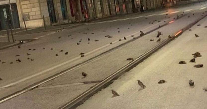 se 0201 - Cientos de aves mueren por fuegos artificiales durante la víspera de Año Nuevo en Roma, Italia