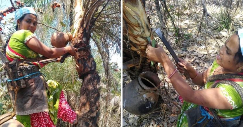 toddy - Mujer escala palmeras de 9 metros para extraer vino de palma y mantener a su hija enferma. Ídola
