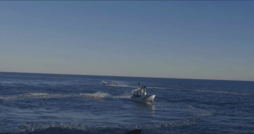 vaquita marina - Sea Shepherd denuncia ataque contra barco que protege a la vaquita marina en BC; hay 2 heridos