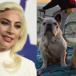 Lady Gaga perros 2 - La mujer que ha ganado 500 mil dólares por encontrar los perros de Lady Gaga