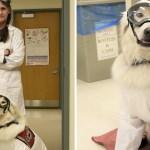 perro servicio laboratorio - Perrito de servicio trabaja en un laboratorio y ayuda a su dueña con discapacidad. Es un científico