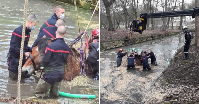 yegua canal rescate bomberos - Yegua jugaba en la orilla de un canal y terminó atrapada. Sus ángeles la regresaron a tierra firme