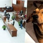 Rodolfo corazon congreso - Diputados de Sinaloa exigen justicia para el perrito Rodolfo Corazón